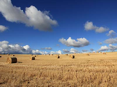 Guardianships (Image of Field of Haybales)